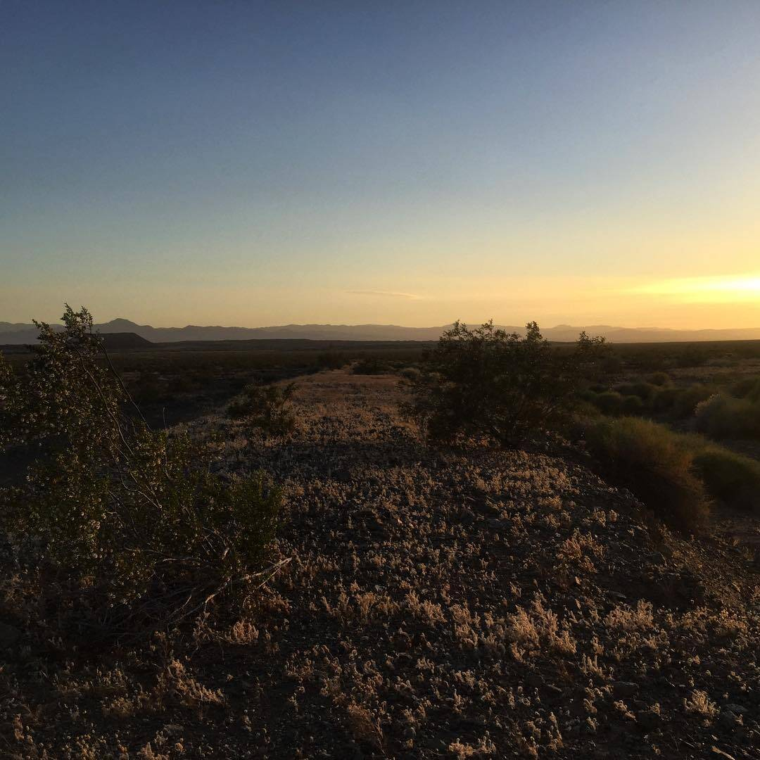 Evening walks in the Mojave Desert  #drylab2023 #desertwalks #desertsunset